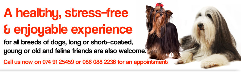 All Breeds Dog Grooming Centre promotes a healthy, stress–free and enjoyable grooming experience